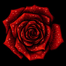 Red Rose. Artistic, Hand-drawn, Color Image Of A Red Rose Flower With Drops Of Water On A Black Background.
