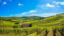 Radda In Chianti Vineyard And Panorama At Sunset. Tuscany, Italy