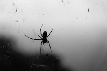 Black Spider With Its Web On The Window In Black And White. Atmosphere Of Fear Or Halloween