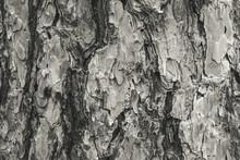Monochrome Pine Bark Background