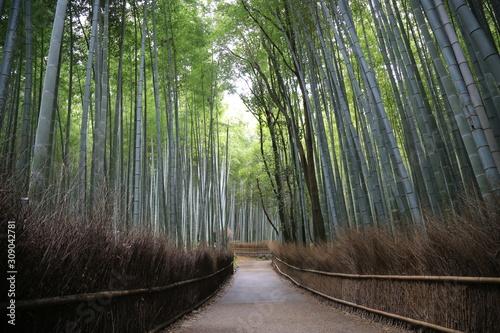 Arashiyama forst, Kyoto, Japan