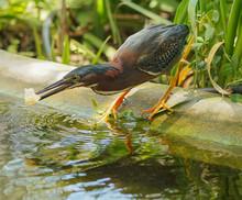 Bird Beak Animal Feathers Avia...