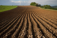 Cultivated Land Prepared For S...