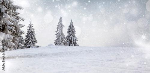 fototapeta na drzwi i meble panorama of snowy fir trees christmas banner