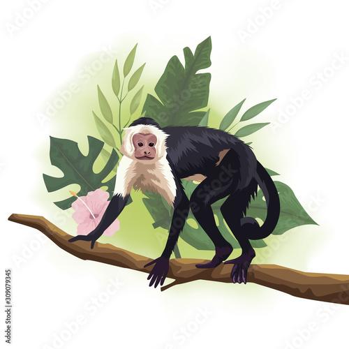 Photo wild Capuchin monkey in tree branch scene