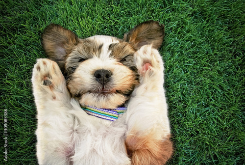 authentic and unique photo of a mixed breed puppy with her paws by her head cove Fototapete