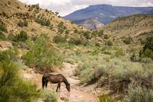 Wild Mustangs In Little Book Cliffs #6