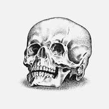 Human Skull In Vintage Style. ...