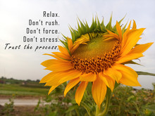 Inspirational Motivational Quote - Relax. Do Not Rush, Force, And Stress. Trust The Process. With Background Of Sunflower In Bloom In Field As Life Process Illustration Concept. Words Of Wisdom.