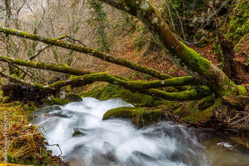 Photo Troncos inclinados de haya cubiertos de musgo y agua del riachuelo en movimiento