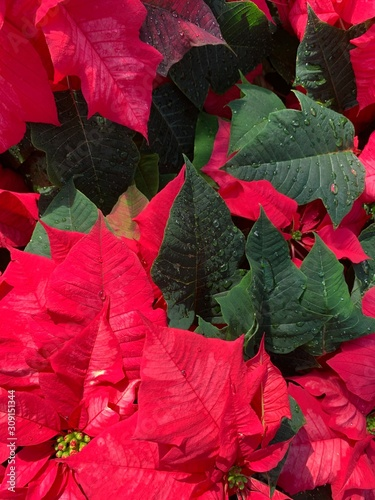 Vertical red and green foliage