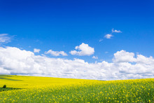 Spring Yellow Field In The Vil...
