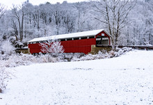 Morning Snow At Schlicher's Co...