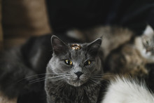 Wedding Rings And A Cat. The W...