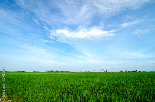 Tuinposter Groene Rural area view surrounding with beautiful landscape of green paddy rice field