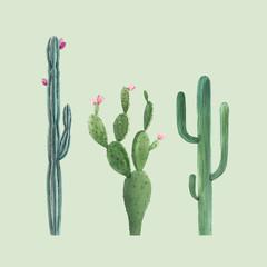 Prekrasne tri vektorske akvarele kaktus ručno nacrtane ilustracije set. Prozirna pozadina. Izolirani predmeti.