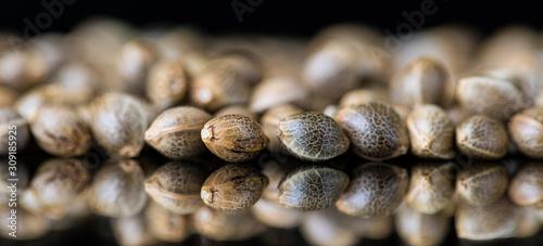 Cuadros en Lienzo Macro Close-up Focus of Cannabis Marijuana Seeds on a reflective black backgroun