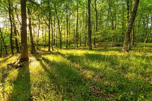 Beautiful shot of the sun rising over a green forest with different kinds of plants