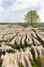Limestone Pavement Above Malha...