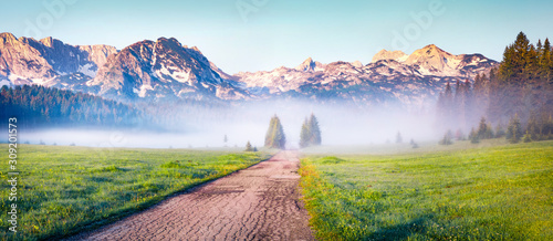 Fototapeta Soft fog coming down from the mountains surrounds the sunny valley. Panoramic summer scene of Durmitor Nacionalni Park, Montenegro, Zabljak town location. Traveling concept background. obraz na płótnie