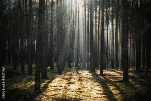 Beautiful view of the sun shining through the tall trees in a forest