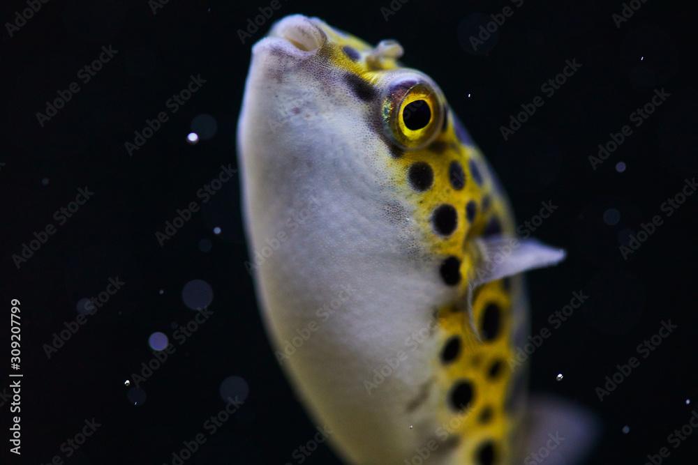 Fototapeta rybka