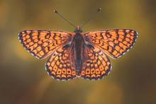 Farfalla Arancione E Nera Con ...