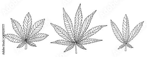 Fototapeta Black and white hemp leaf set isolated on white background