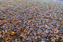 Pflastersteine Im Herbst Mt Ru...