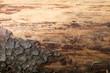 sturkturierter brauner Baumstamm aus Holz mit Rinde als Hintergrund oder Untergrund mit Freiraum für Text