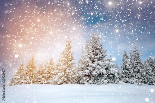 fototapeta na drzwi i meble Scenic winter landscape with snowy fir trees. Winter postcard.