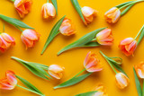 Fototapeta Tulips - Yellow pastels color tulips on the yellow background. Retro vintage style.