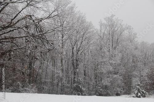 trees in winter © Katey