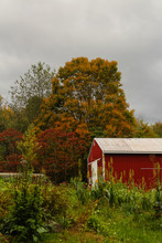 Right Autumn Leaves And Red Shed Against Threatening Grey Sky