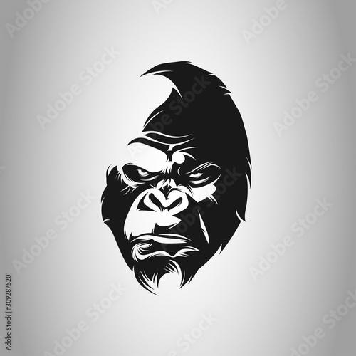 Photo gorillas, ape, gorilla gorilla, lowland gorilla, apes, wild life, monkey, silver