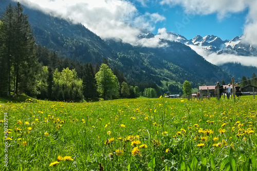 Fototapety, obrazy: stroller on trail along side blooming meadow with mountain panorama view, Allgäu Alps, Bavaria, Germany