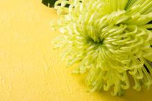 菊と黄色い背景