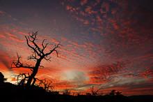 Dead Tree Sunset Silhouette