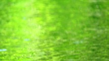 Blur Water Surface In Pond Gre...