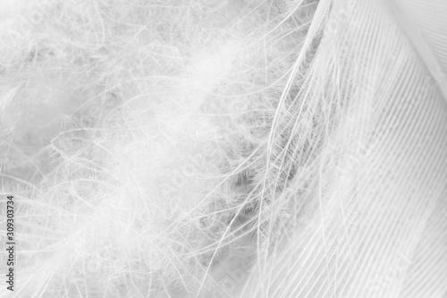 Fotografía  Beautiful fluffy macro white feather swan pattern texture background