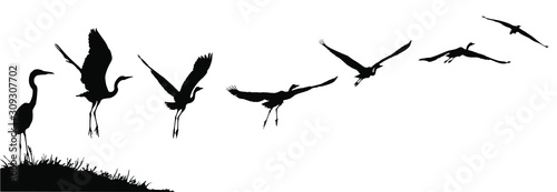 Vector silhouettes of a heron or egret taking flight.