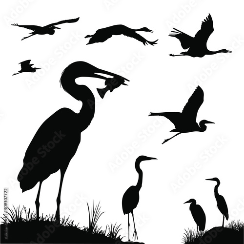 Fotografia, Obraz Vector silhouettes of great egrets and swans in flight.