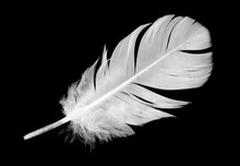 Beautiful White Feather Floati...