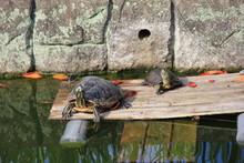 日光浴中の亀2匹