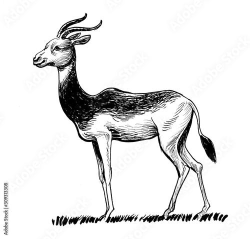 piekna-antylopa-afrykanska-tusz-czarny