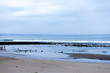 early morning low tide tidal pools and birds