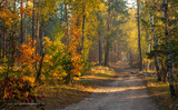 Fototapeta Perspektywa 3d - Forest. Autumn. A pleasant walk through the forest, dressed in an autumn outfit. The sun plays on the branches of trees and permeates the entire forest with its rays. Light fog makes the picture a lit
