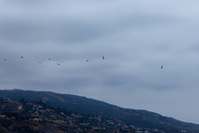 Terns Flying Over Malibu Hills Homes From The Ocean