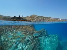 Coastline With Two Cormorant Birds On Rock And Fish Underwater, Mediterranean Sea, Split View Above And Below Water Surface, Spain, Costa Brava, Catalonia, El Port De La Selva