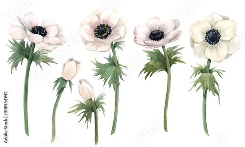 Billede på lærred Beautiful watercolor floral set with isolated anemone flowers
